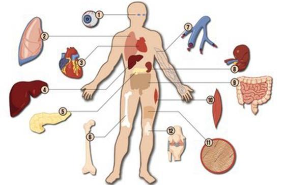 人体器官结构图卡通