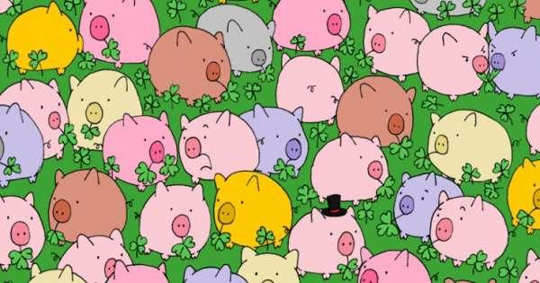 一不小心就会被萌萌的小猪分散注意力啊!